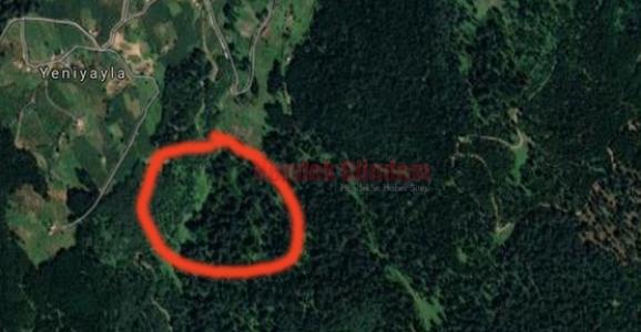 Hendek Ormanları Tehdit Altında