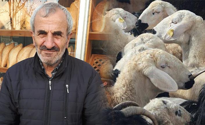 Koyunlarını Bulana Ödül Verecek