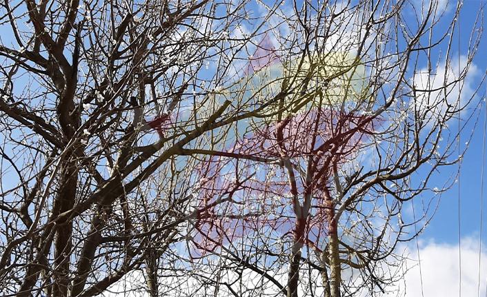Ağaçlar Mevsimleri Şaşırdı