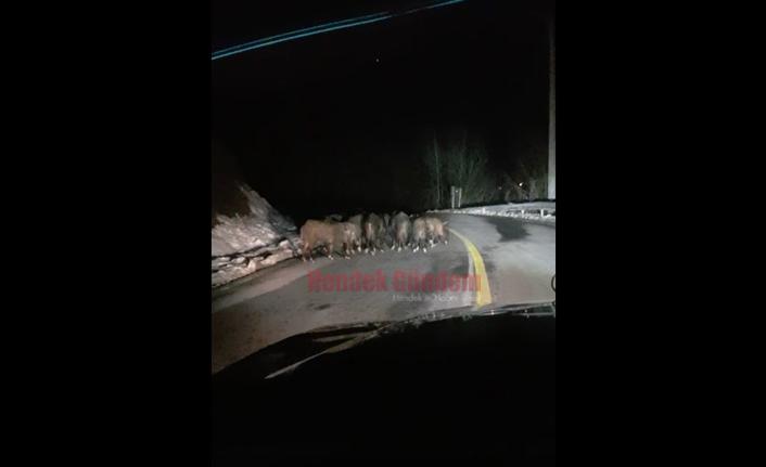Domuzlar Dikmen Grup Yoluna İndi