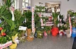 Hendek Belediyesi Çiçek Bahçesine Döndü